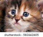 Portrait Of Cute Little...