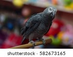 Small photo of African gray parrot