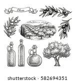 olive set. hand drawn vector... | Shutterstock .eps vector #582694351
