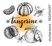 Ink Hand Drawn Tangerine Set...
