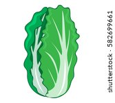 chinese cabbage solated... | Shutterstock .eps vector #582699661