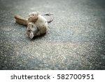 Dead Sparrow On The Floor