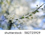 Toned Background Spring Tree...