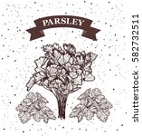 parsley. herb and spice label.... | Shutterstock .eps vector #582732511