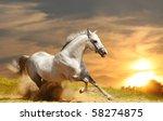 Stock photo white stallion in sunset 58274875