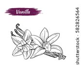 vector sketch of vanilla... | Shutterstock .eps vector #582826564