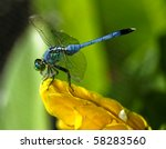 Blue Dragon Fly