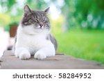 Stock photo cute cat enjoying his life outdoors 58284952