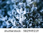 Plant Winter Nature Background...