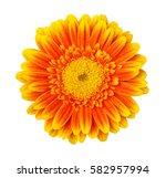 Yellow Gerbera Flower Isolated...