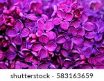 lilac flowers  spring background | Shutterstock . vector #583163659