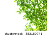 green leaf isolated on the... | Shutterstock . vector #583180741