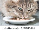 fluffy gray cat eating cat food ... | Shutterstock . vector #583186465