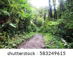 path in the deep jungle.... | Shutterstock . vector #583249615