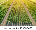rows of green soybean | Shutterstock . vector #583308475