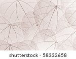 skeleton leaf background | Shutterstock . vector #58332658
