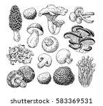 mushroom hand drawn... | Shutterstock . vector #583369531