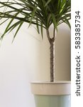 potted palm tree | Shutterstock . vector #583385734