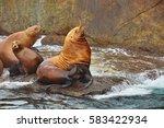 seals near seward  alaska  usa | Shutterstock . vector #583422934