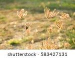 backyard gardening  | Shutterstock . vector #583427131