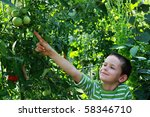 8 years old boy with tomatoes ... | Shutterstock . vector #58346710
