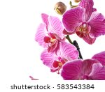 close up fragment of a orchid... | Shutterstock . vector #583543384