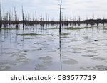 field of lily pads in a swamp...   Shutterstock . vector #583577719