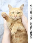 orange cat with hands looking... | Shutterstock . vector #583583815