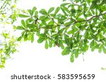 green leaf isolated on the... | Shutterstock . vector #583595659