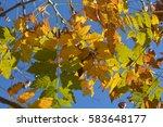 yellow  red  green  orange... | Shutterstock . vector #583648177