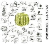 fruits hand drawn sketches... | Shutterstock .eps vector #583762429