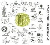 fruits vector set. hand drawn...   Shutterstock .eps vector #583762429