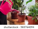 Young Woman Watering Plant...