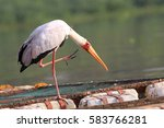 Small photo of The yellow-billed stork armed tries to drive away an importunate dragonfly