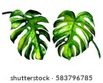 watercolor exotic leaves | Shutterstock . vector #583796785