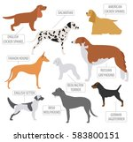 hunting dog breeds collection... | Shutterstock .eps vector #583800151
