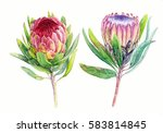 Watercolor Exotic Flowers Clip...