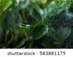 A Spiderweb Covered In Morning...