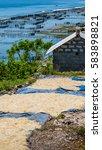 Small photo of Dry Algal on the Ground near seaweed plantations - Nusa Penida, Bali, Indonesia