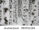 forest trees covered in fresh... | Shutterstock . vector #583932184
