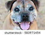 Senior Terrier Close Up Happy...
