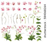 orchid tropical flowers floral... | Shutterstock .eps vector #584068264