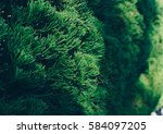 green pine background. | Shutterstock . vector #584097205