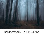 Blue Misty Forest