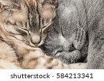 closeup of two  sleeping... | Shutterstock . vector #584213341