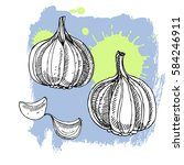 hand drawn garlic. can be used... | Shutterstock .eps vector #584246911