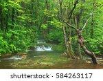 marsh forest of nakajima... | Shutterstock . vector #584263117