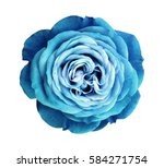 Stock photo turquoise rose flower white isolated background with clipping path nature closeup no shadows 584271754