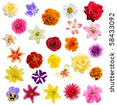 Big Collage From  Flowers On A...