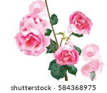 watercolor vintage roses... | Shutterstock .eps vector #584368975